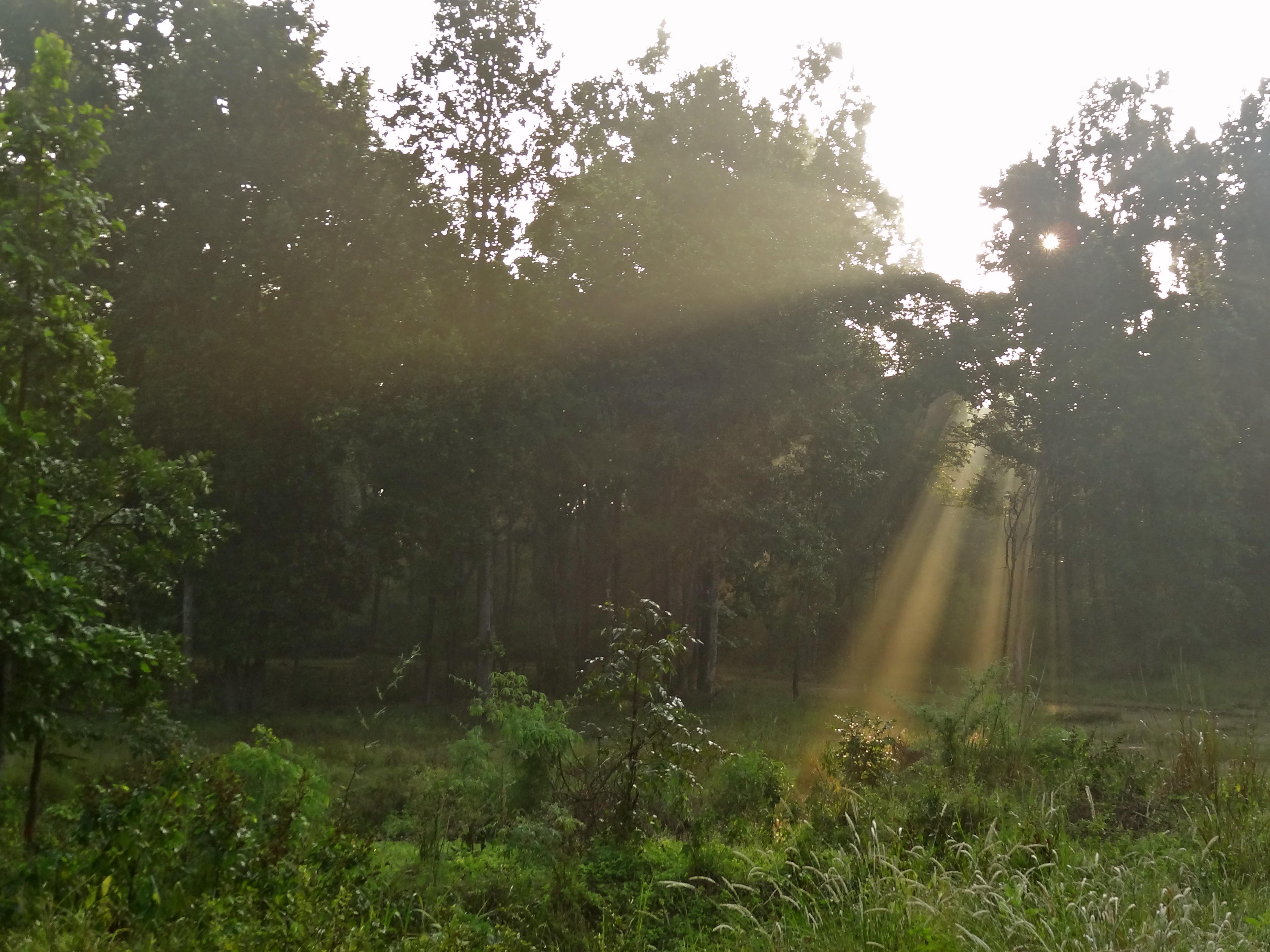 kanha national park, Kanha madhya pradesh