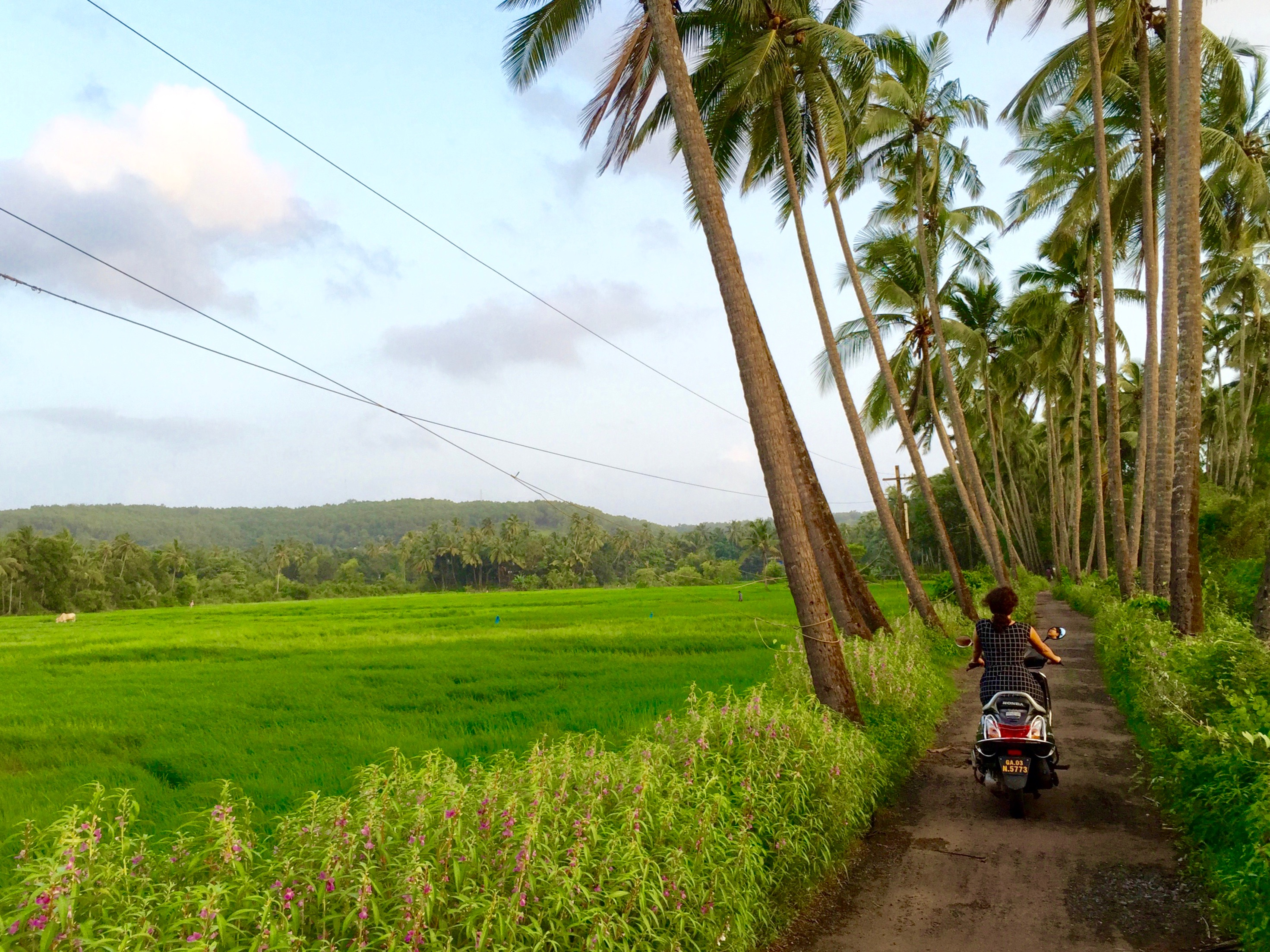 Image result for Rural Goa
